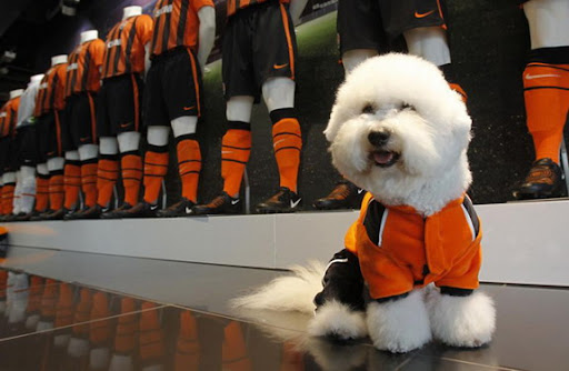 Shakhtar Donetsk present kit for dogs