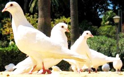 Foto de palomas alertas en un parque