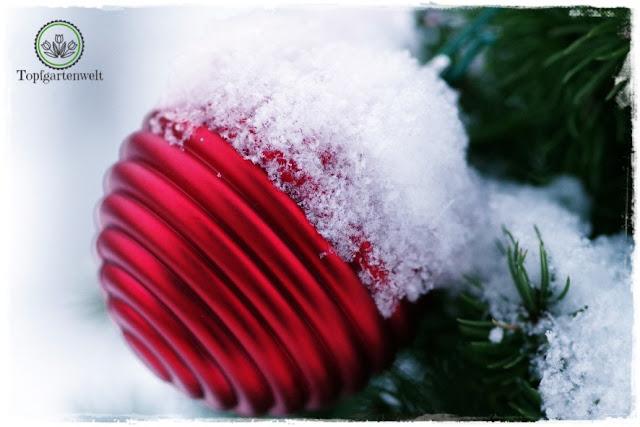 Gartenblog Topfgartenwelt festliche Weihnachtsdekoration in Rot und Weiß + Rezept Flammkuchen: Weihnachtskugel im Schnee