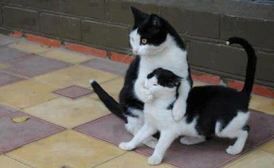 Secretos que nunca supiste sobre tu gato
