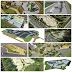 Skateparks : les meilleurs projets pour cette fin d'année 2020 (PART 1)