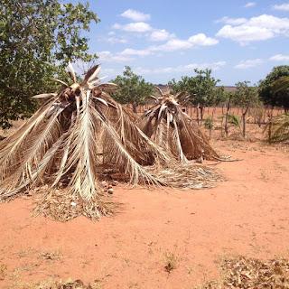 Resultado de imagem para foto do poço ban carnaubais