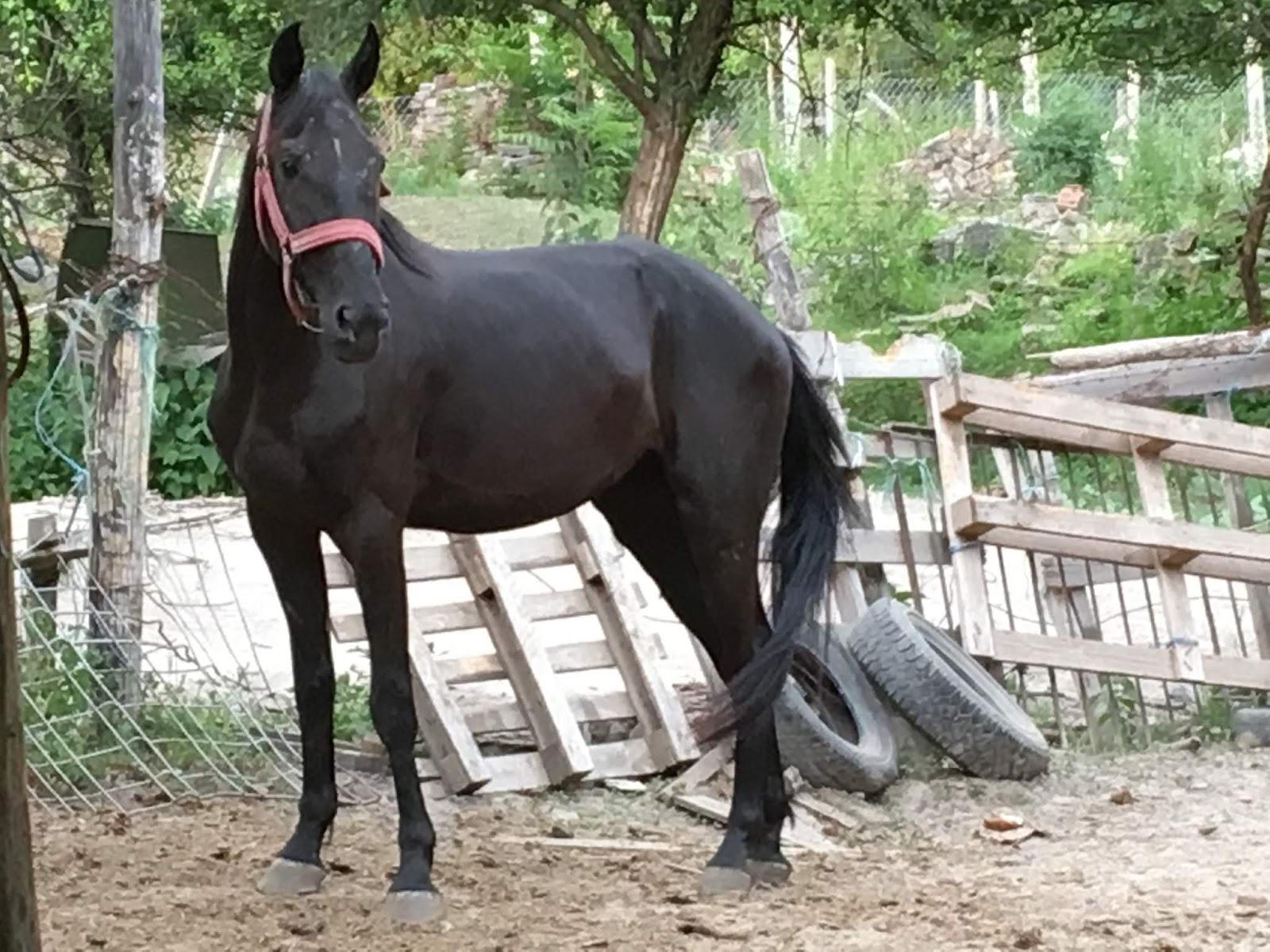 Hogy lovagolnak a nagy lányok faszon?