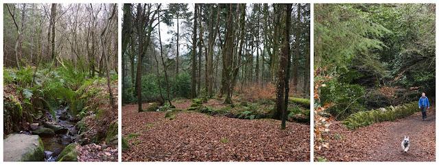 Ravensdale forest - C.Gault 2019