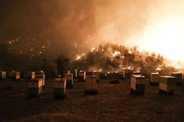Μελισσοκόμοι – 13 μέτρα στήριξης για όσους επλήγησαν από τις πυρκαγιές