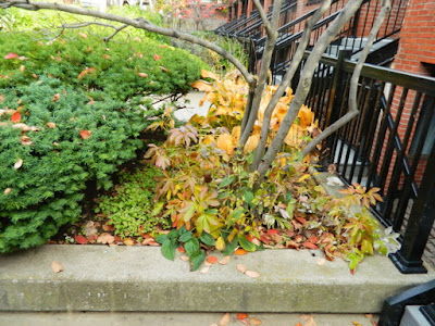 Downtown Toronto Fall Cleanup Before by Paul Jung Gardening Services--a Toronto Organic Gardener
