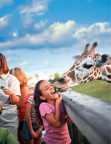 Seaworld Busch Gardens 50 Weekday Tickets On Sale Now