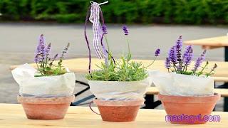 Tanaman Hias untuk Balkon Lavender