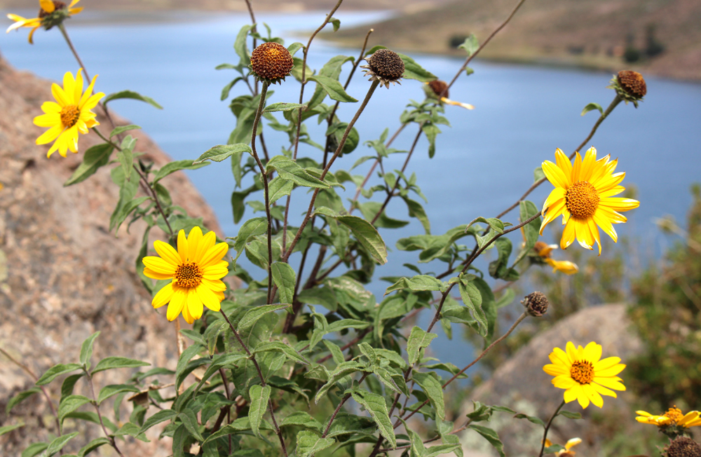 Lake Umayo, near Puno, Peru - travel blog