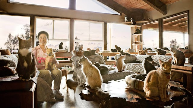 Cat Lady Thought She Could Handle 1,000 Cats, But She Had No Idea.