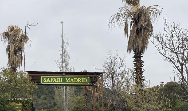 Safari Madrid entrada