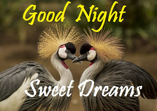 good night images of love birds
