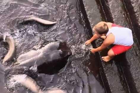 Aneh! Bocah Ini Pelihara Ikan Pari sebagai Teman Bermain