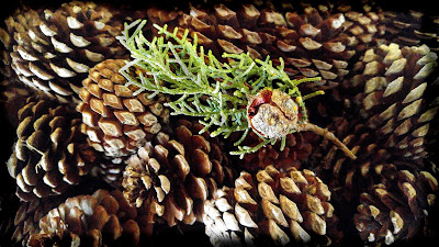 themerryoldedame juniper and pinecones closeup winter decorations