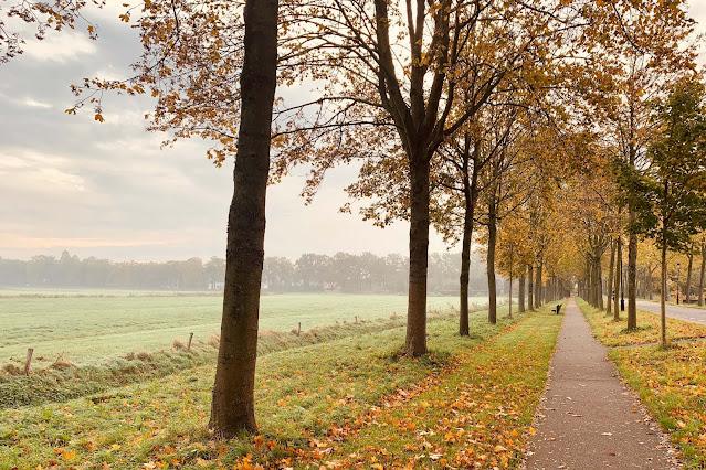 Dreven Culemborg Herfst