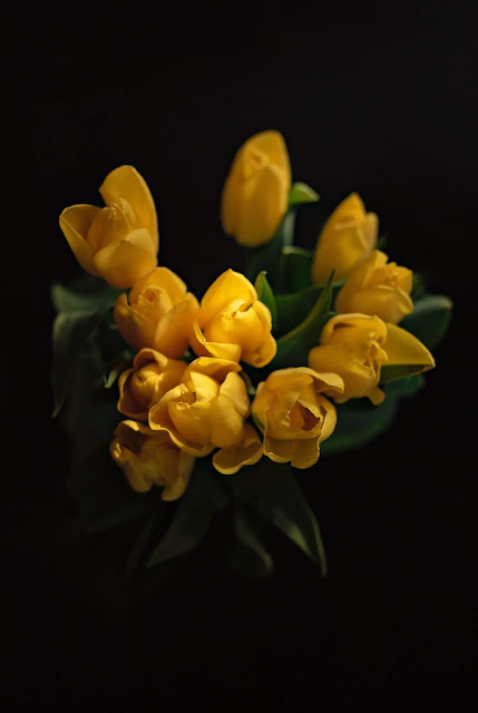 Yellow Tulips | Photo by Violeta Avram via Unsplash