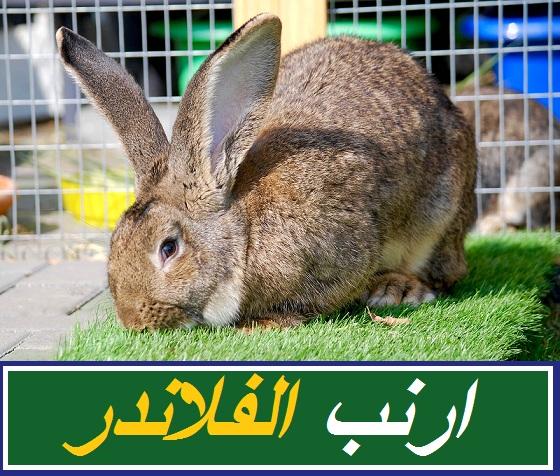 """""""انواع الارانب الفرنساوي"""" """"اضخم انواع الأرانب"""" """"أنواع الأرانب البلدي"""" """"أنواع الارانب البلدي"""" """"ارانب نيوزلندي"""" الأرنب المصري"""" """"افضل سلالات الارانب المنتجة للحم"""" """"الأرانب الشنشيلا """"الارانب"""" """"الارانب فى الحلم"""" """"الارانب الفرنساوي"""" """"الارانب البلدى"""" """"الارانب الصغيرة في المنام"""" """"الارانب وهي بتولد"""" """"الارانب البيضاء فى الحلم"""" """"الارانب تلد ام تبيض"""" """"الارانب البرية"""" """"الارانب الرومى"""" """"الارانب البابيون"""" """"الارانب الارانب"""" """"ارانب belier francais"""" """"أرانب cute"""" """"الارانب doc"""" """"الأرنب en francais"""" """"تربية الارانب en francais"""" """"الارنب في الحلم"""" """"الأرانب ف"""" """"تربية الارانب fb"""" """"الأرنب in english"""" """"ارانب in english"""" """"الارانب mbc3"""" """"ارانب mbc3"""" """"الأرنب meaning in english"""" """"الارانب المشاغبة mbc3"""" """"نحن الأرانب mp3"""" """"رسوم الارانب mbc3"""" """"الارانب المضحكة mbc3"""" """"كرتون الارانب mbc3"""" """"ارانب ouedkniss"""" """"ارانب olx"""" """"أرانب ouedkniss"""" """"بطاريات الارانب olx"""" """"الارانب pdf"""" """"الأرنب pdf"""" """"ارانب png"""" """"أرانب papillon"""" """"الأرنب png"""" """"الأرنب ppt"""" """"تغذية الارانب pdf"""" """"امراض الارانب pdf"""" """"الارانب rabbits"""" """"الارانب الشنشيلا"""" """"الأرنب traduction"""" """"الأرنب talking"""" """"ارانب v line"""" """"vlog الارانب"""" """"الأرنب wikipedia"""" """"الارنب والبسكوته"""" """"الارانب فى الحلم للمتزوجة"""" """"الارانب فى الحلم للعزباء"""" """"الارانب فى الحلم ايه"""" """"الارانب فى الحلم للحامل"""" """"تفسير الارانب فى الحلم للشيخ سيد حمدى"""" """"اكل الارانب فى الحلم"""" """"موت الارانب فى الحلم"""" """"ارانب في المنام"""" """"ارانب في الحلم"""" """"الارانب الفرنساوى الابيض"""" """"انواع الارانب الفرنساوي"""" """"سعر الارانب الفرنساوي"""" """"مشروع الارانب الفرنساوي"""" """"اسعار الارانب الفرنساوي"""" """"تربيه الارانب الفرنساوي"""" """"مزارع الارانب الفرنساوي"""" """"اسعار الارانب الفرنساوي اليوم"""" """"الارانب الفرنساوى"""" """"الارانب الفرنسية"""" """"الارنب الفرنساوى"""" """"الارانب البلدي المصرى"""" """"الارانب البلدى الاحمر"""" """"الارانب البلدى بالصور"""" """"الارانب البلدى فى مصر"""" """"الأرانب البلدي الأسود"""" """"انواع الارانب البلدى"""" """"اسعار الارانب البلدى"""" """"تكاثر الارانب البلدى"""" """"الارانب البلدي"""" """"الارانب البلدى المصرى"""" """"الارانب البلدي المصري"""" """"الأرانب البلدي"""" """"الارانب الصغيرة في المنام للعزباء"""" """"ارانب الصغيرة في المنام"""" """"تفسير رؤية الارانب الصغيرة في المنام للعزباء"""" """"رؤية الارانب البيضاء الصغير"""