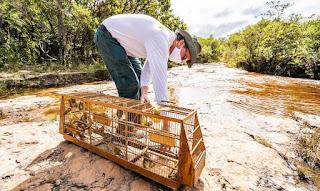 Ibama devolve à natureza 248 pássaros vítimas do tráfico