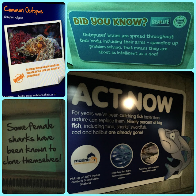 Info boards at Sea Life London