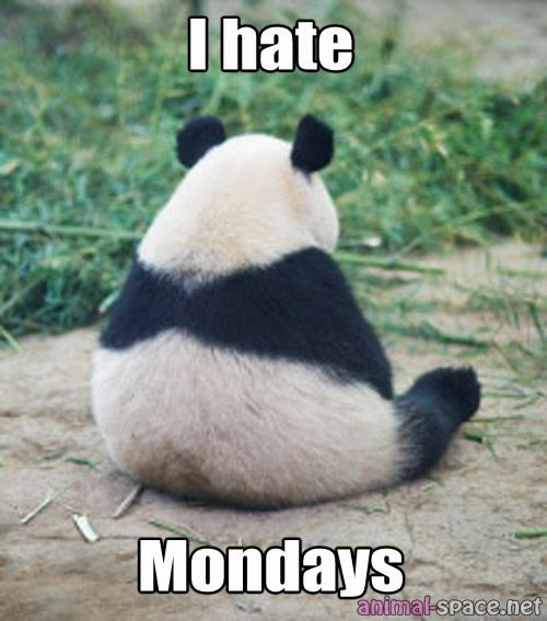 Funny and Cute Memes on Panda