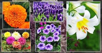 फूल और उनके स्किनकेयर के लिए लाभ