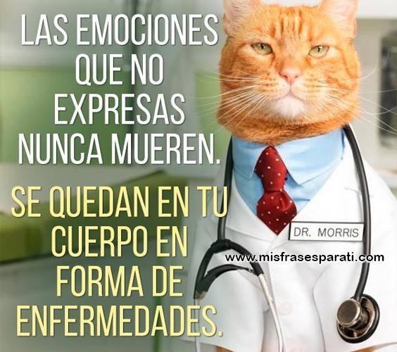 Las emociones que no expresas nunca mueren, se quedan en tu cuerpo en forma de enfermedades
