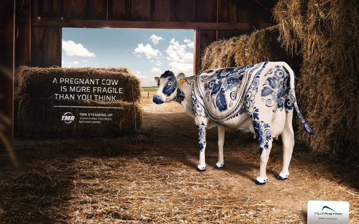 "Special animal food advertising: ""A pregnant cow is more fragile than you think."""
