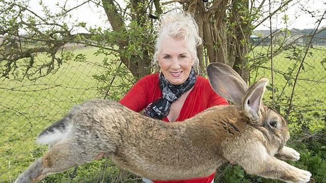 اكبر ارنب في العالم