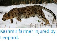 https://sciencythoughts.blogspot.com/2019/03/kashmir-farmer-injured-by-leopard.html