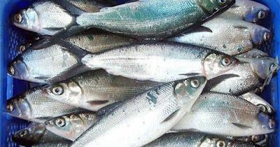 Makna Ikan Bandeng di Balik Perayaan Imlek