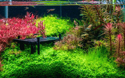 Dutch Style Planted Aquascape