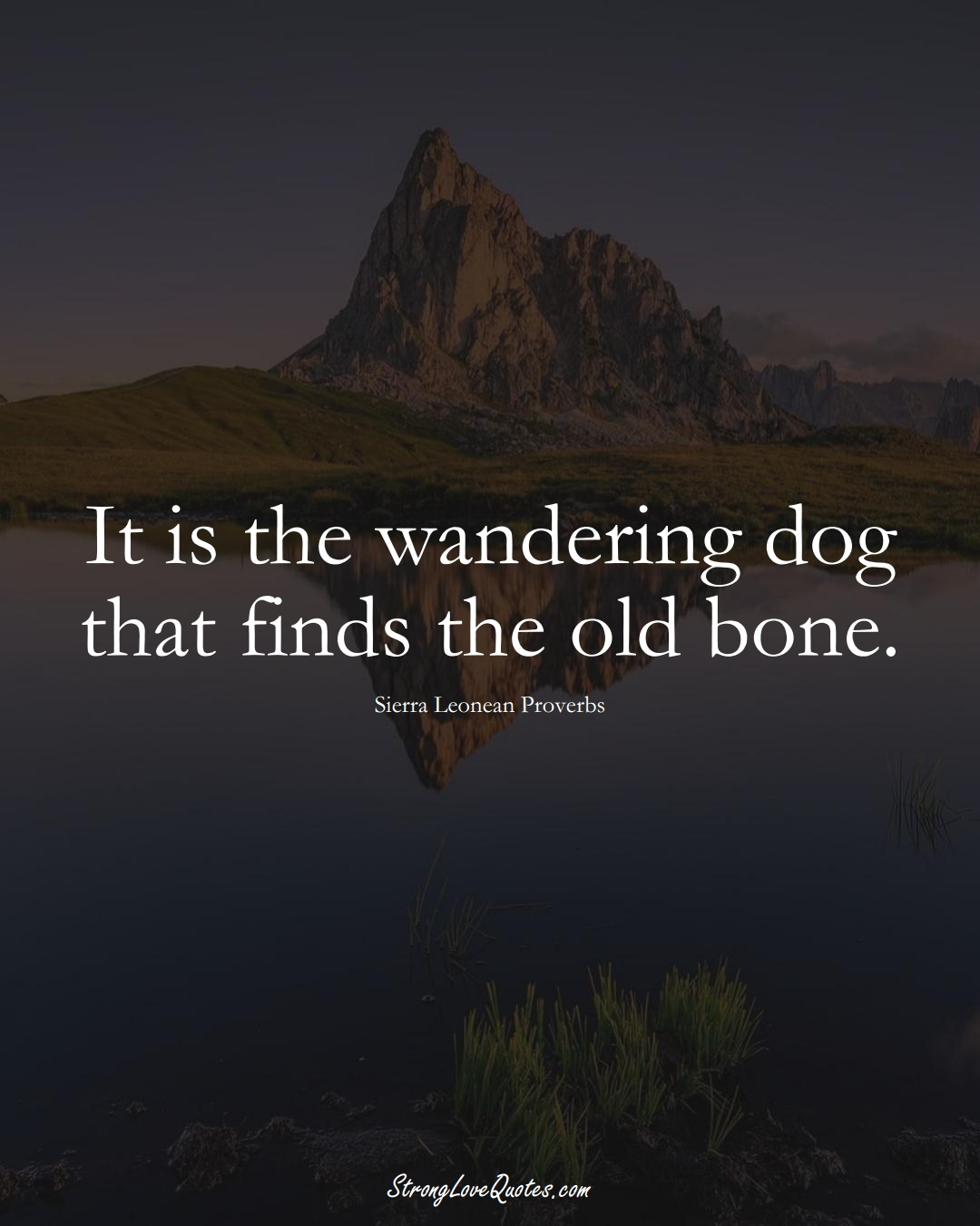 It is the wandering dog that finds the old bone. (Sierra Leonean Sayings);  #AfricanSayings