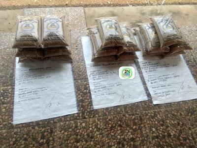Benih padi yang dibeli ANA FAHMAWATI, Tuban, Jatim. (Sebelum packing karung ).
