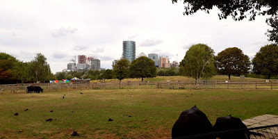 Mudchute Park and Farm - Canary Wharf