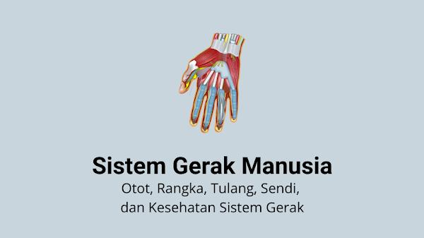 Sistem Gerak Manusia -  Otot, Rangka, Tulang, Sendi, dan Kesehatan Sistem Gerak