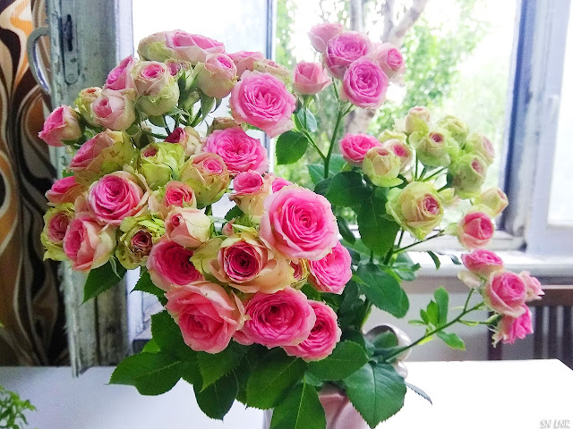 Крохотные прекрасные розы фото