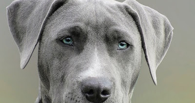 What is Breed Specific Legislation?