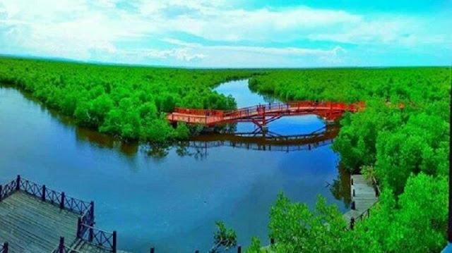 Pesona Indah Wisata Hutan Mangrove Kuala Langsa