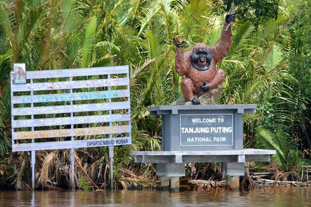 Tanjung Puting Seems Interesting: A New Bucket-list? 👀