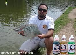 Essen Khusus Ikan Nila