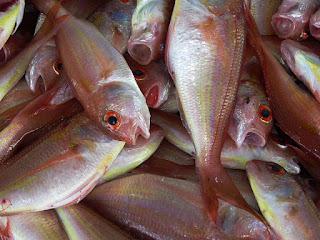 fish-farming-nigeria