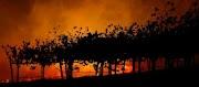 Tulipalo Kalifornian viinimaassa alkoi lähellä vaurioitunutta PG&E -tornia