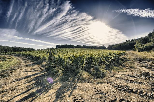 Borgo di Fonterutoli-Le vigne