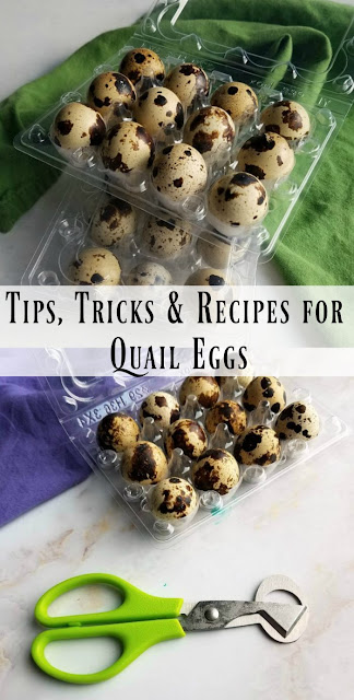 If you are looking for great ways to use quail eggs, you have come to the right spot.  There are so many great ways to use the cute little eggs in all sorts of appetizers and meals! Here are some tips, tricks and recipes for quail eggs.