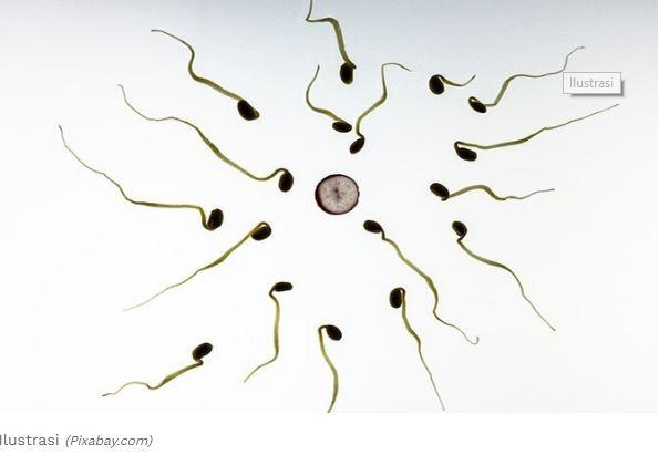 Inilah Daftar Makanan yang Bisa Tingkatkan Kualitas Sperma Saat Puasa