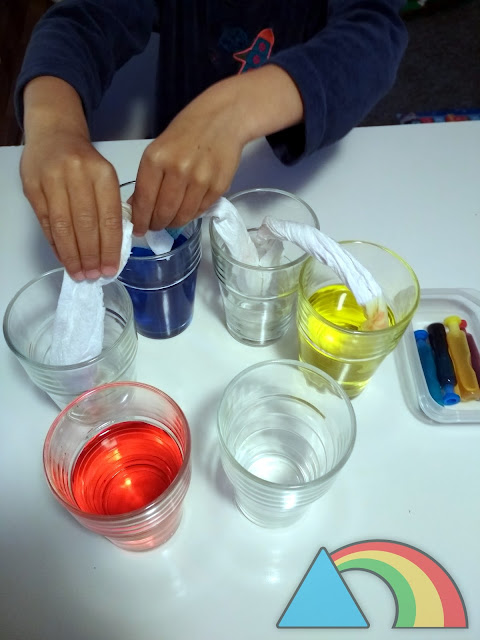 Colocando los churros de papel de cocina en los vasos para empezar el experimento