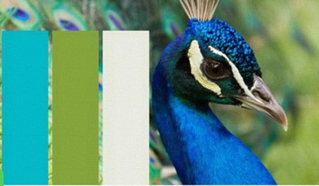 Can You Recognize The Animal By Its Color Scheme?