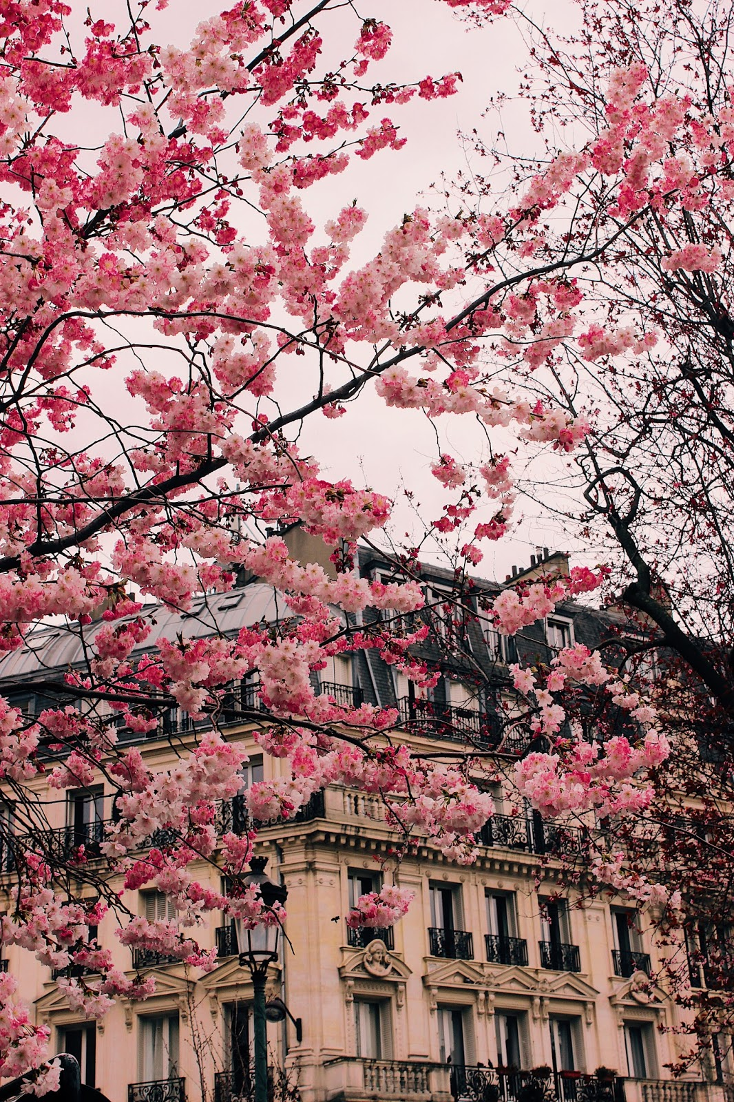 instagram guide to paris, must shot pics paris, where to take pictures in paris, what to capture in paris, paris, paris travel guide, paris balcony, paris architecture, paris pic, paris building, spring in paris, blossoms in paris, paris flowers