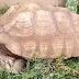 344 ετών χελώνα...