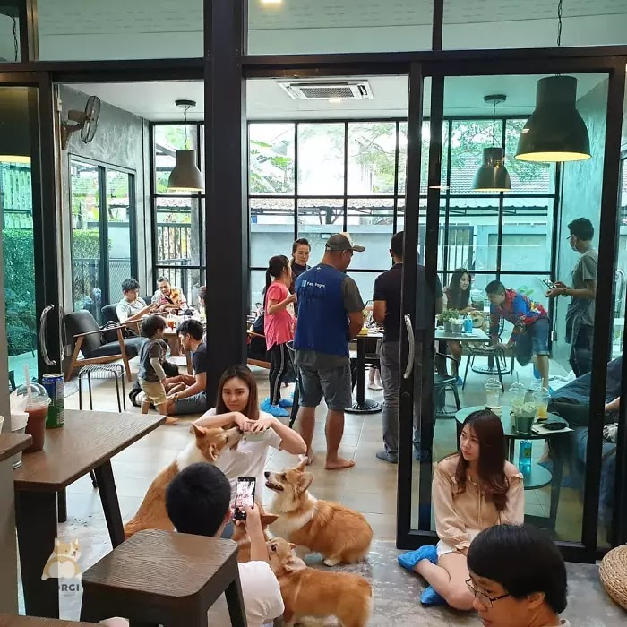 Woman Opened A Cafe With Corgi Puppies, And It's Just Adorable